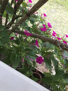 花の写真・画像素材[632900]