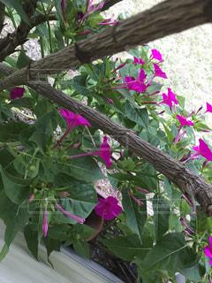花の写真・画像素材[632901]