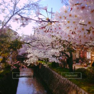 春の写真・画像素材[633059]