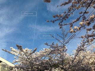 空の写真・画像素材[633627]