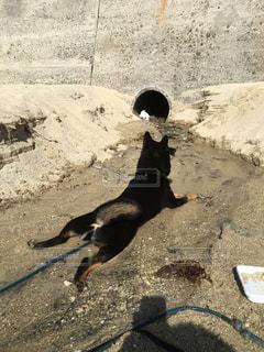 犬の写真・画像素材[633653]