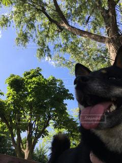 犬の写真・画像素材[633663]