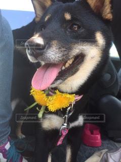 犬の写真・画像素材[633750]