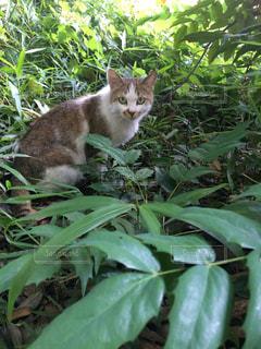 猫の写真・画像素材[633565]