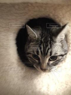 猫 - No.633569