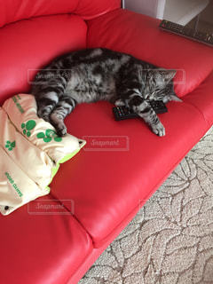猫 - No.633571