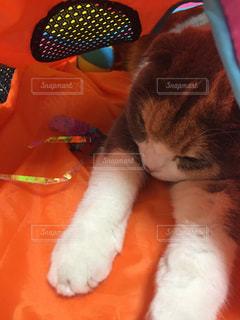 猫の写真・画像素材[633574]