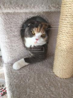 子猫の写真・画像素材[633576]