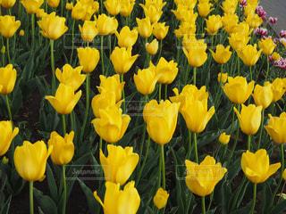 花の写真・画像素材[633844]