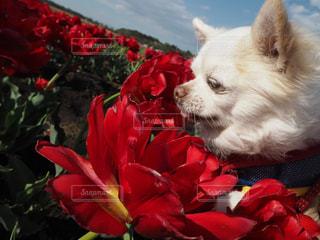 犬の写真・画像素材[633845]