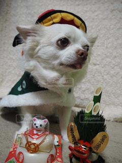 近くに犬のアップの写真・画像素材[993720]