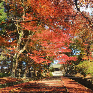 秋の写真・画像素材[644129]