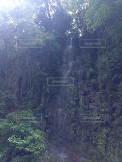滝の写真・画像素材[683818]