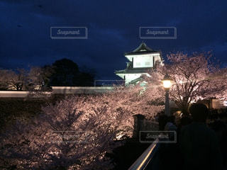 桜の写真・画像素材[633995]