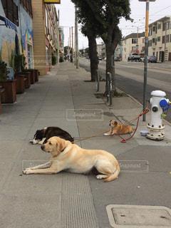 サンフランシスコの写真・画像素材[634318]
