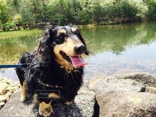 犬の写真・画像素材[24999]