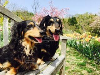 犬の写真・画像素材[25011]