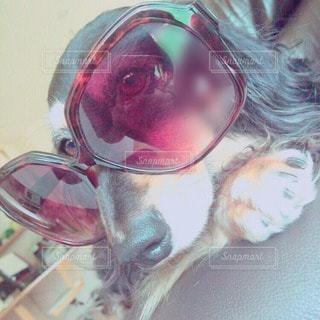 犬の写真・画像素材[25034]