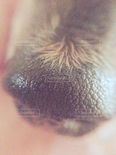 犬の写真・画像素材[147903]
