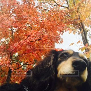 犬の写真・画像素材[156675]