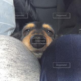 犬の写真・画像素材[323265]