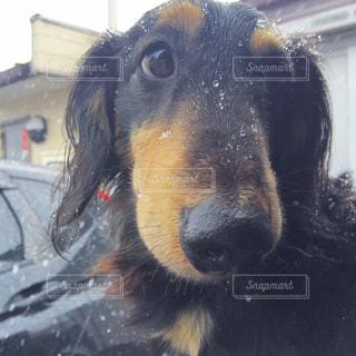犬の写真・画像素材[323266]