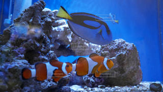 魚 - No.345008