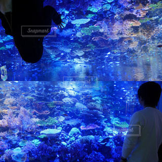 魚の写真・画像素材[345009]