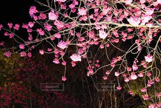 風景 - No.395213
