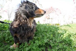 犬 - No.435929