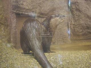 動物の写真・画像素材[548323]