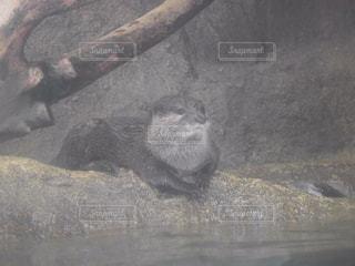 動物の写真・画像素材[548324]