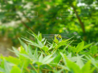 自然の写真・画像素材[575749]