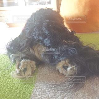 犬の写真・画像素材[575757]