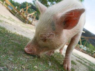 動物の写真・画像素材[614295]