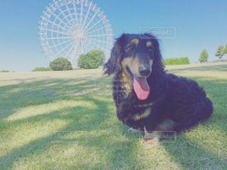 草の中に座っている犬の写真・画像素材[712881]
