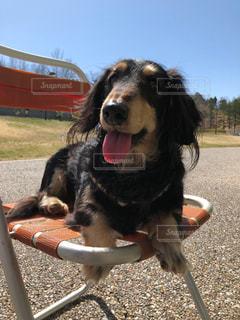 草の中に座っている犬の写真・画像素材[1061606]