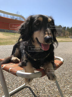 黒と茶色の犬の写真・画像素材[1061607]