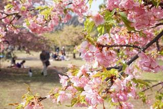 花の写真・画像素材[637570]