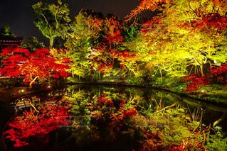 秋の写真・画像素材[637576]