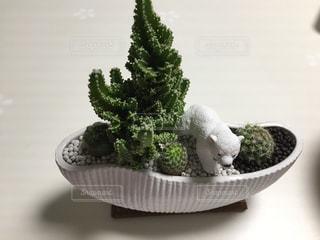 多肉植物とサボテンの寄せ植えwithシロクマの写真・画像素材[1160038]