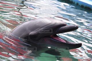 イルカの写真・画像素材[634634]