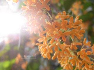 光の写真・画像素材[642711]