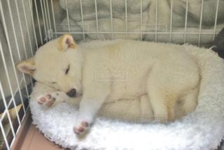 名犬こんの写真・画像素材[643310]