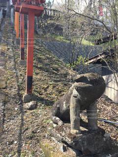 狛犬の写真・画像素材[910532]