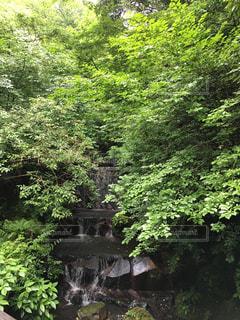 森林の写真・画像素材[635173]