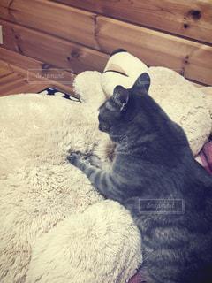 猫の写真・画像素材[635403]