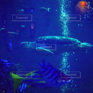 水族館の写真・画像素材[637011]