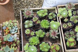 植物の写真・画像素材[641188]