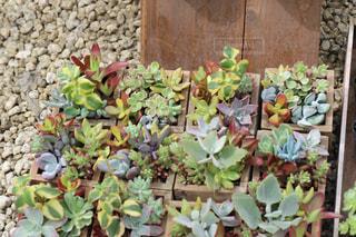 植物の写真・画像素材[641191]